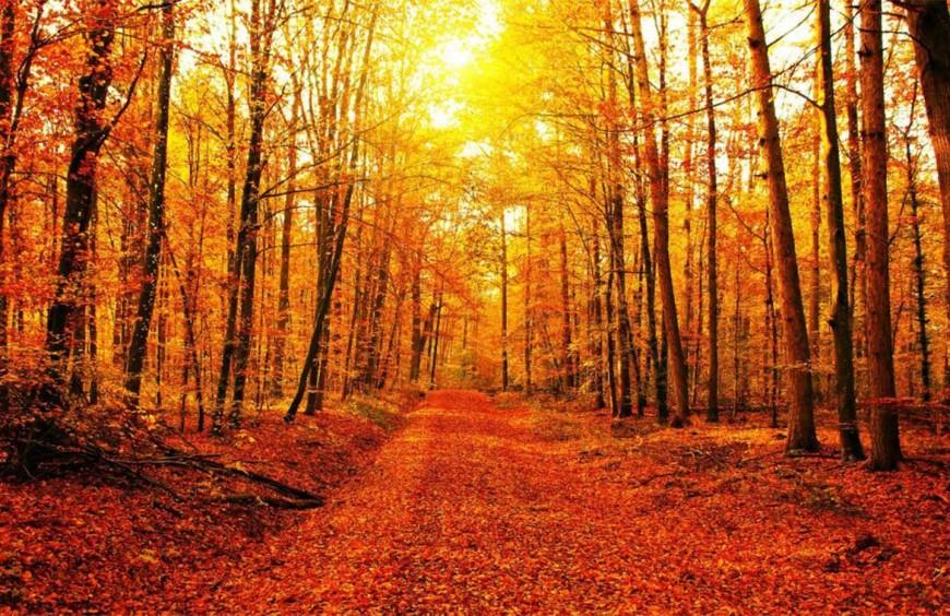 Foliage e Trekking in Autunno
